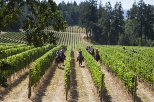 Vineyard Horseback Rides