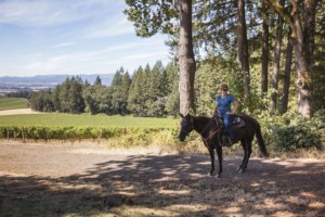 Vineyard Tours by Horseback