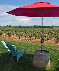 Wine Tours in McMinnville, Oregon