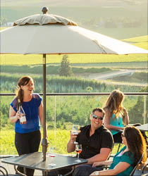 Pinot Noir in McMinnville, Oregon